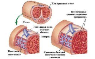 Эректильная дисфункция у мужчин: основные причины и симптомы, формы — психогенная, васкулогенная, проблема у молодых, импотенция, какой врач поможет, возраст, профилактика
