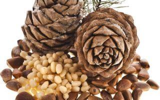 Орехи при диабете: какие можно — арахис, миндаль, кедровый, как использовать створки и листья грецкого, орехи при 2 типе сахарного диабета