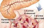 Роль и функции поджелудочной железы в пищеварении — их нарушение