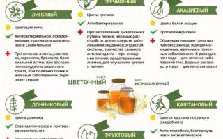 Лечение щитовидной железы грецкими орехами (настойка, рецепты)