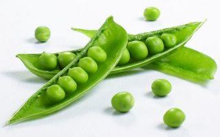 Горошек при панкреатите — зеленый, консервированный, можно ли?