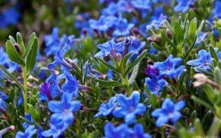 Травы для лечения щитовидной железы
