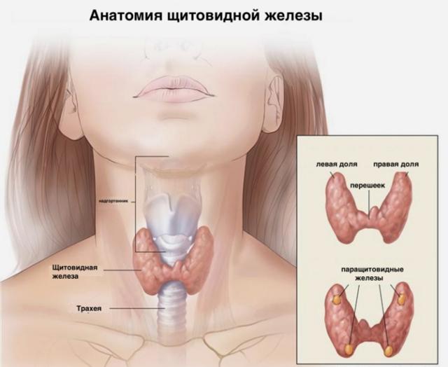 Дисфункция щитовидной железы: симптомы у женщин, лечение недуга