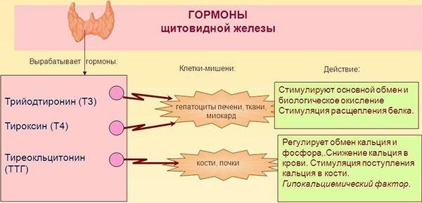 Базедова болезнь: лечение, причины и симптомы заболевания (фото)