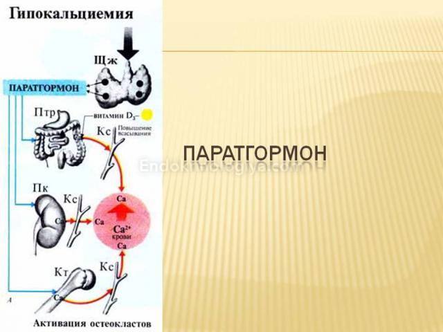 ПАРАТГОРМОН И КАЛЬЦИТОНИН - можно ли принимать одновременно (совместимость)