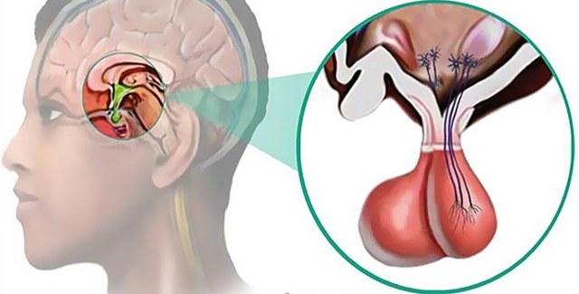 Щитовидная железа и беременность: как влияет, можно ли забеременеть, симптомы и лечение заболеваний