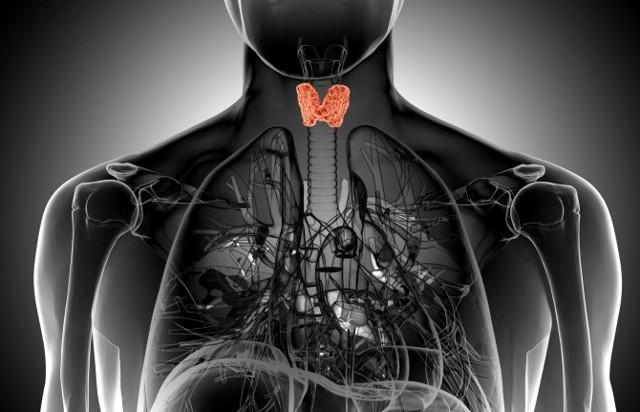 Патология щитовидной железы