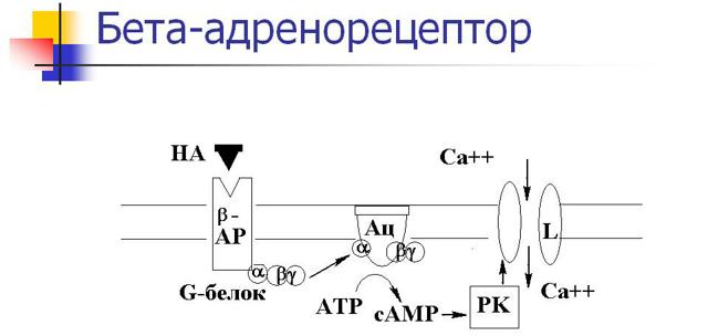 БЕТАКСОЛОЛ - инструкция по применению, цена, отзывы и аналоги