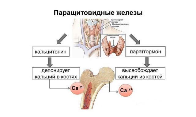 Виды заболеваний паращитовидной железы