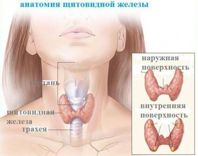 Объем щитовидной железы у женщин: что есть норма, а что отклонение (таблица, фото)