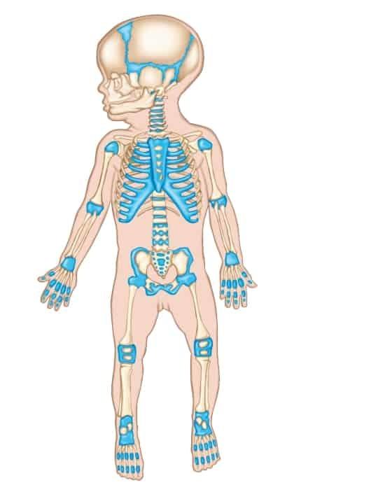 Норма гормонов щитовидной железы: таблица показателей (у женщин, мужчин, детей), расшифровка анализов (т4, т3, ТТГ)