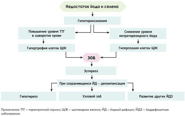 Диффузный зоб щитовидной железы: причины, симптомы, степени, диагностика и лечение заболевания