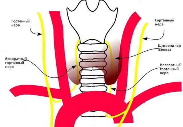 Удалили долю щитовидной железы что делать дальше. Особенности восстановления здоровья пациента после тиреоидектомии. Как подготовиться к операции на щитовидной железе