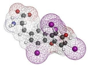 Гормон тироксин (Т4): за что отвечает, норма анализа, отклонения (симптомы, причины и лечение)