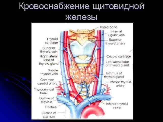 Классификация заболеваний щитовидной железы