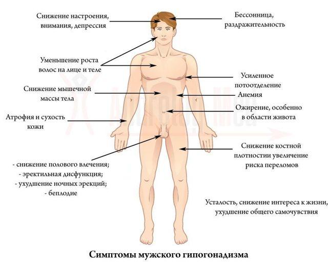 Лечение гипогонадизма у мужчин: препараты от первичного и вторичного, возрастного, гипергонадотропного, гипогонадотропного