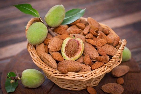 Орехи при диабете: какие можно - арахис, миндаль, кедровый, как использовать створки и листья грецкого, орехи при 2 типе сахарного диабета