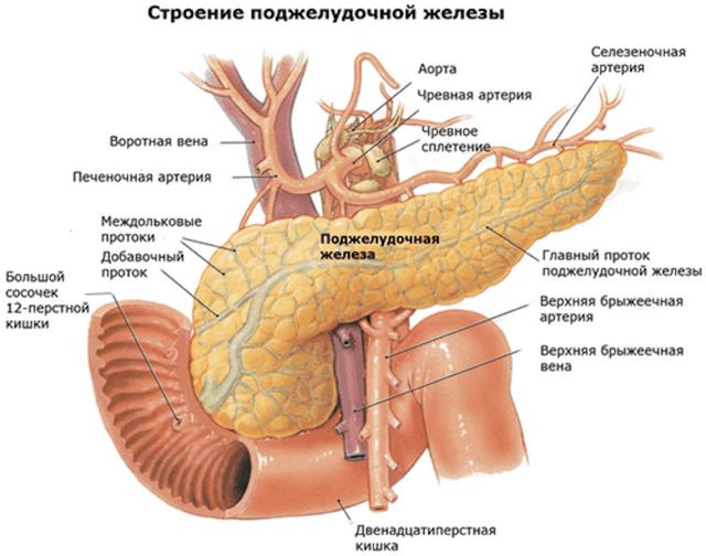 Реактивный панкреатит: симптомы, лечение и диета