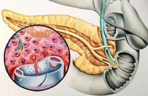 Соматостатин гормон: основные функции, что если избыток гормона поджелудочной железы