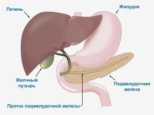 Взаимосвязь почек и поджелудочной железы при панкреатите