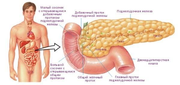 Правильное кровоснабжение поджелудочной железы