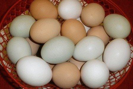 Можно ли есть яйца при панкреатите?