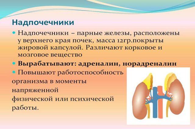 Воспаление надпочечников: признаки у женщин, симптомы у мужчин, лечение медикаментами и народными средствами, влияет ли на зрение