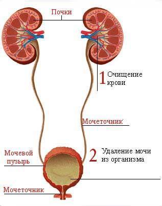 Диастаза и панкреатит