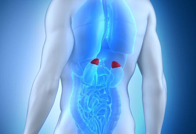 Адреналин гормон: какая железа и где вырабатывает гормон надпочечника, стресса, действие, функции, избыток и недостаток