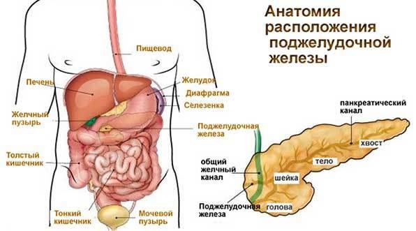 Пальпация при панкреатите поджелудочной железы