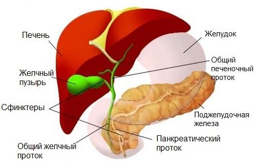Фестал при панкреатите поджелудочной железы