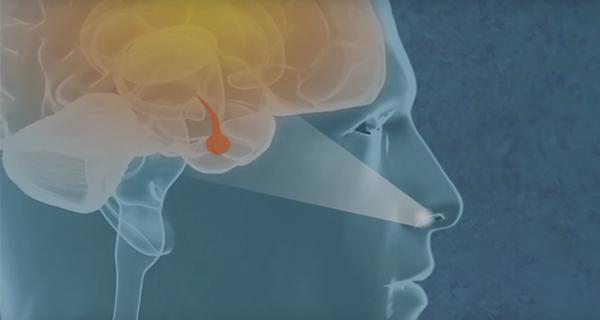 Кровоизлияния в гипофиз: основные симптомы, МРТ при аденоме и микроаденоме гипофиза