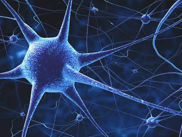 Либерины гипоталамуса: их функции, гормон и нейросекреты