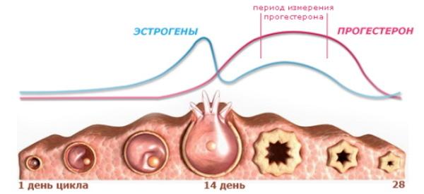 Прогестерон при беременности: норма на ранних сроках по неделям, низкий при беременности и планировании, повышенный, показатели при ЭКО, избыток в анализе
