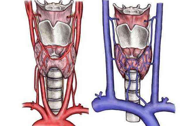 Токсическая аденома: симптомы, лечение без операции, операция и склерозирование этанолом