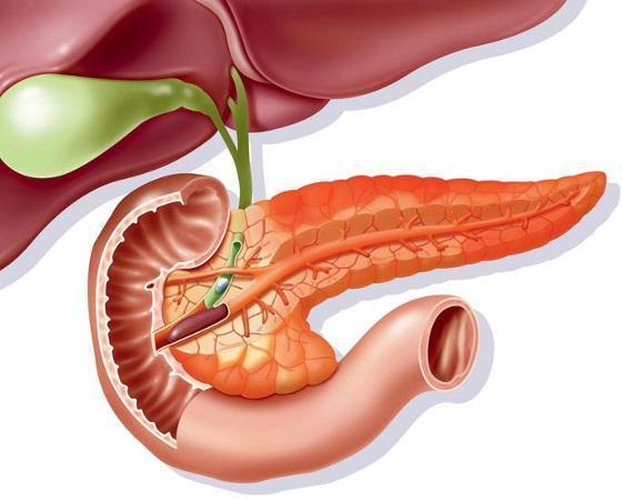 Гипофункция и гиперфункция поджелудочной железы