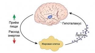 Лептин гормон: когда и как сдавать анализ на жировой гормон, за что отвечает, норма у женщин, как повысить гормон сытости