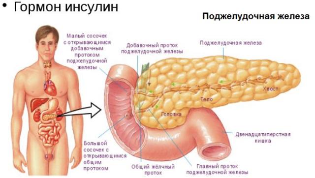 Контринсулярные гормоны: какая роль в организме, механизм действия
