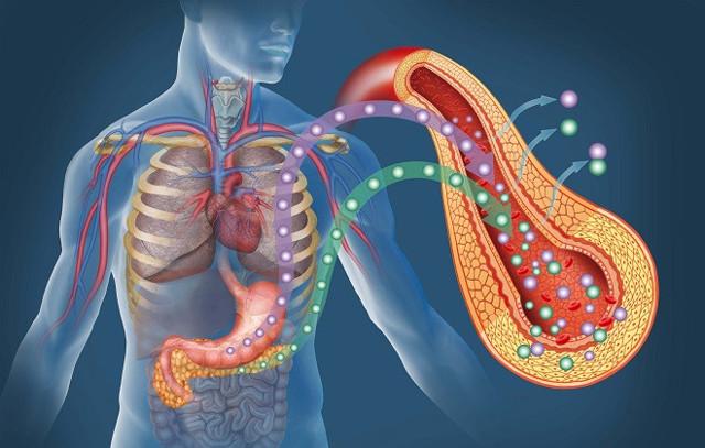 Панкреатическая амилаза: что это такое и какова норма в крови?