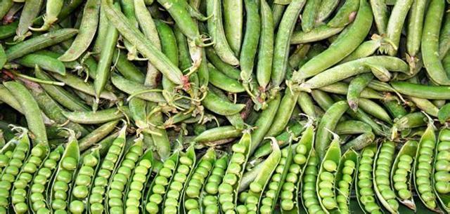 Горошек при панкреатите - зеленый, консервированный, можно ли?
