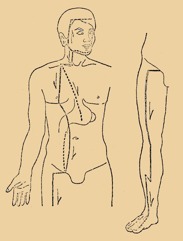 Селезенка и поджелудочная железа: это одно и тоже?