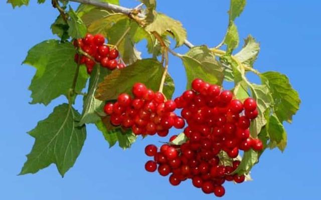 Какие фрукты можно есть при панкреатите а какие нельзя?