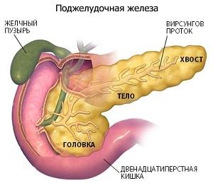 Где находится поджелудочная железа и как болит - симптомы, лечение