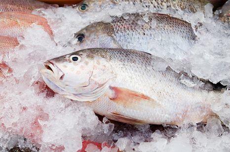 Сорта рыбы при панкреатите - что можно?