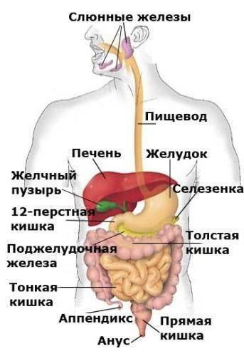 Онкомаркеры поджелудочной железы (СА 19-9)