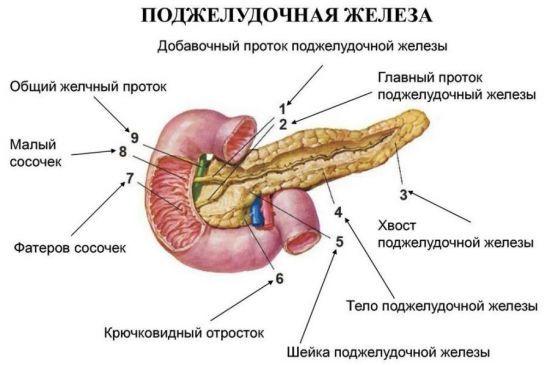 Диффузно-неоднородная структура поджелудочной железы