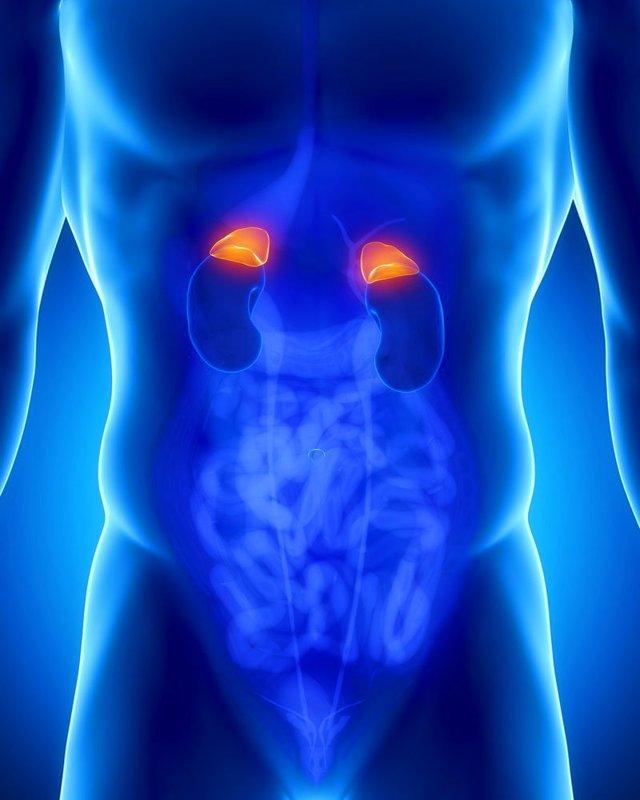 Нодулярная гиперплазия надпочечников: признаки у взрослых, лечение левого и правого