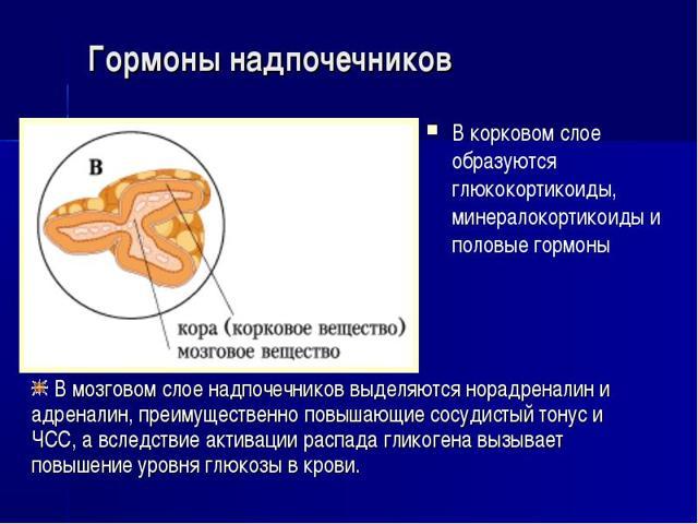 Кровь на гормоны надпочечников: как сдавать анализ при болезни, какие нужны