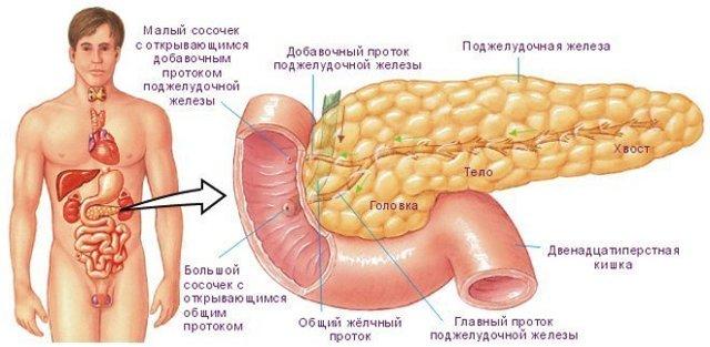 Ферментная недостаточность поджелудочной железы - лечение и симптомы