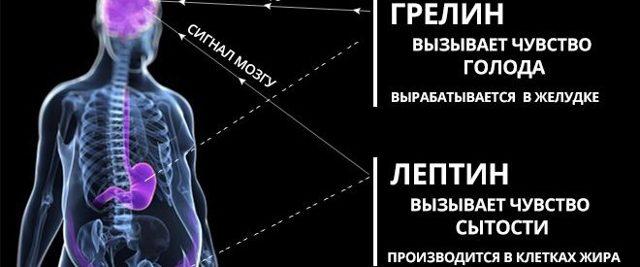 Гормон грелин: как работает гормон голода, анализ его действия, как понизить уровень